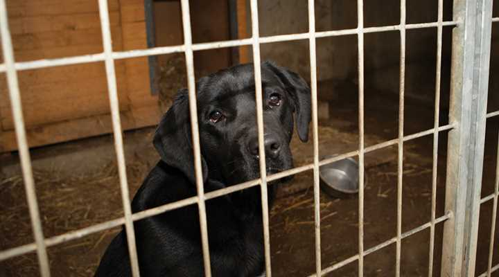 Only 1% of HSUS's budget goes to local pet shelters, where does the other 99% go?