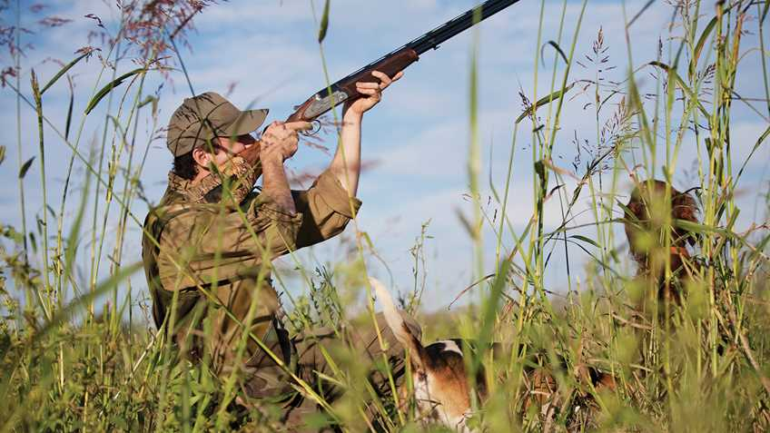Warning for California Upland Bird Hunters:   Lead Ammunition Restrictions in Effect for Opening Day of Dove Season and Beyond