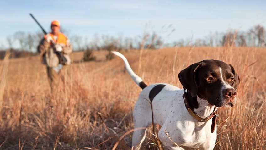 Why does NRA support Right to Hunt and Fish (RTHF) state constitutional amendments?